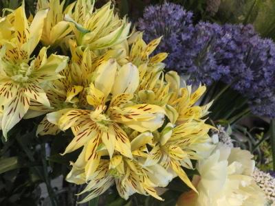オークリーフ(ピンクのアナベル紫陽花)_f0049672_12073633.jpg