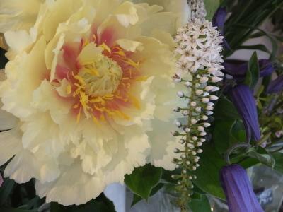 オークリーフ(ピンクのアナベル紫陽花)_f0049672_12080633.jpg
