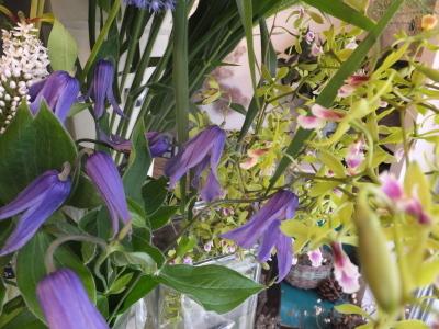 オークリーフ(ピンクのアナベル紫陽花)_f0049672_12085978.jpg