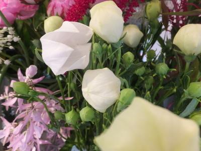 オークリーフ(ピンクのアナベル紫陽花)_f0049672_12090197.jpg