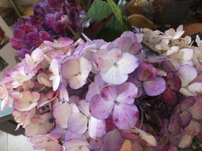 オークリーフ(ピンクのアナベル紫陽花)_f0049672_12100508.jpg