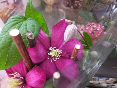 オークリーフ(ピンクのアナベル紫陽花)_f0049672_12101982.jpg