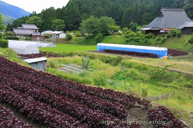 京都 大原の里_f0374092_21050012.jpg