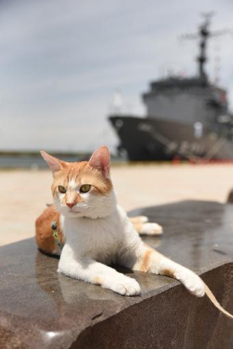 海旅~多用途支援艦ひうち!と、チャイナタウン♪~2018.06.15_b0259218_04533987.jpg