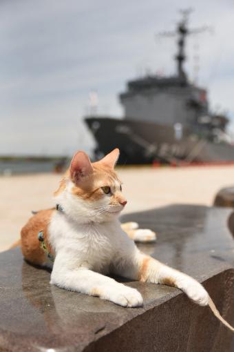 海旅~多用途支援艦ひうち!と、チャイナタウン♪~2018.06.15_b0259218_04535510.jpg