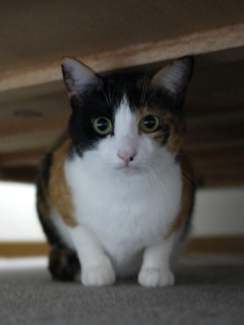 猫のお留守番 みーたんちゃん編。_a0143140_23441801.jpg