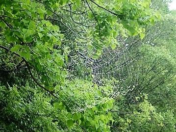 クモの巣_f0089748_20542191.jpg