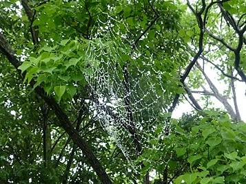 クモの巣_f0089748_20554365.jpg