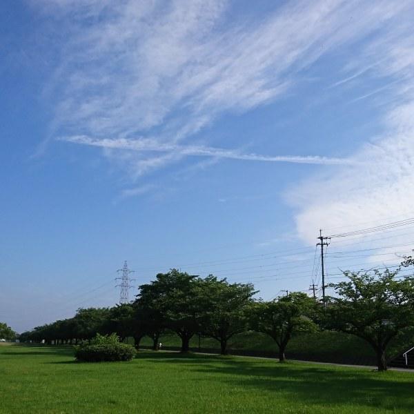 ++トリミング&朝散歩*++_e0354456_09204215.jpg