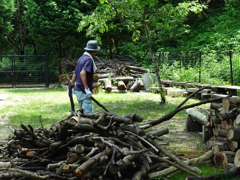 伐採木片付け&小枝鉛筆クラフト・・・うみべの森_c0108460_17503003.jpg