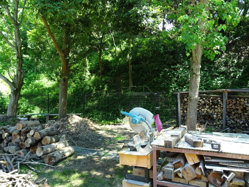 伐採木片付け&小枝鉛筆クラフト・・・うみべの森_c0108460_17511729.jpg