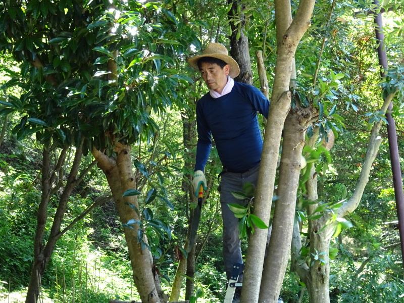 伐採木片付け&小枝鉛筆クラフト・・・うみべの森_c0108460_17511810.jpg
