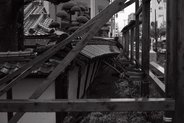 茨木神社_d0349265_15470272.jpg