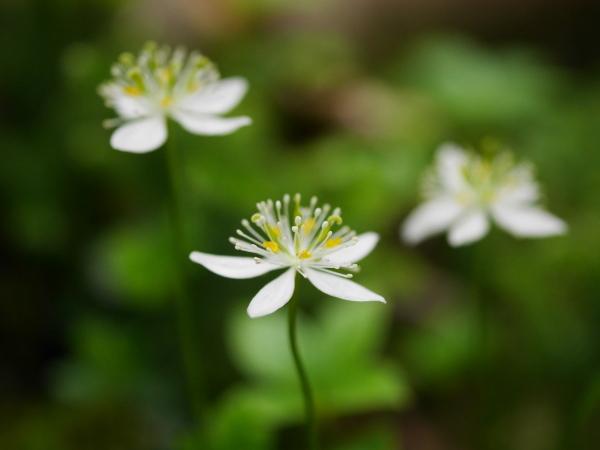続・苔の森の花々_a0351368_11594735.jpg