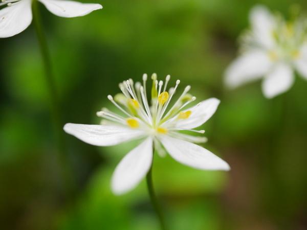 続・苔の森の花々_a0351368_11595526.jpg