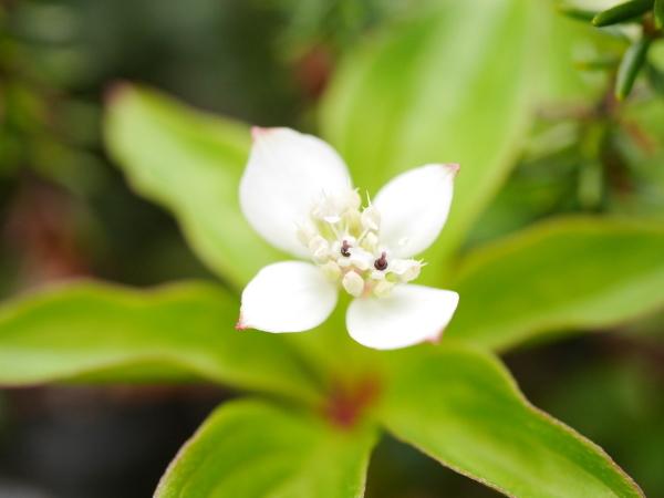 続・苔の森の花々_a0351368_12001150.jpg
