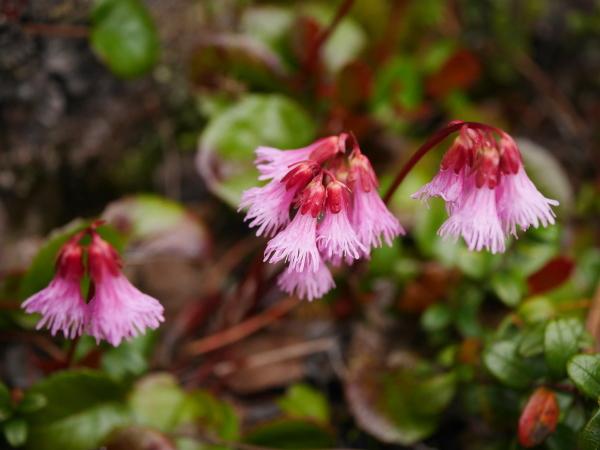 苔の森の花々_a0351368_12010101.jpg