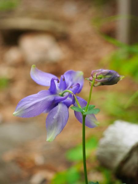 続・苔の森の花々_a0351368_12012134.jpg
