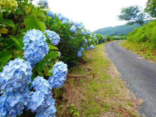 茨木山中をブラブラ_a0345079_13435849.jpg
