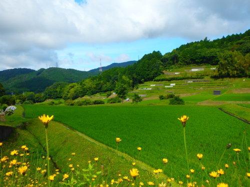 茨木山中をブラブラ_a0345079_13443897.jpg