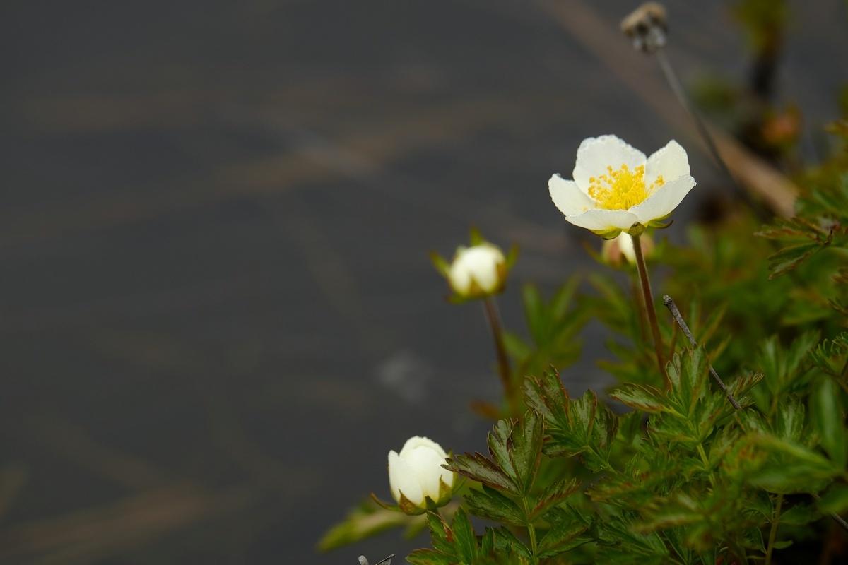 花舞う湿原_e0051186_18012630.jpg