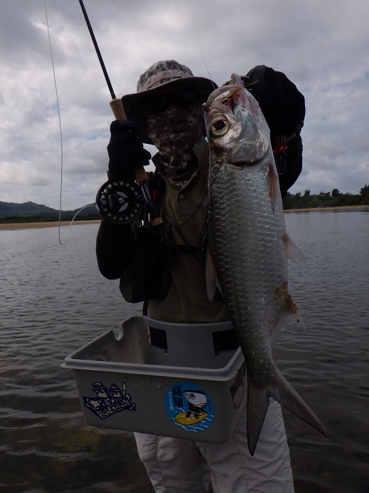遅ればせながら石垣島の釣り in 梅雨_f0097924_14441038.jpg
