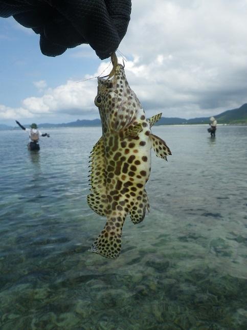 遅ればせながら石垣島の釣り in 梅雨_f0097924_15182724.jpg