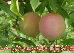 a0325841_21221066.jpg
