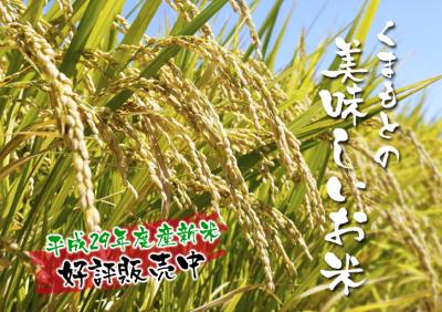 七城米 長尾農園 まもなく平成30年度の田植えです!その前に美しすぎる苗床の様子をご紹介いたします!_a0254656_16523599.jpg