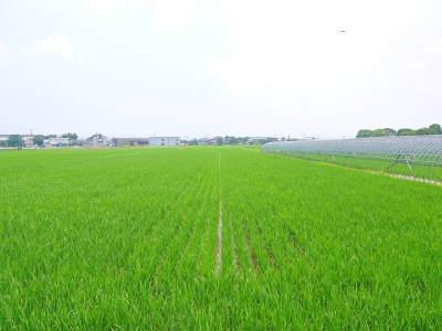 七城米 長尾農園 まもなく平成30年度の田植えです!その前に美しすぎる苗床の様子をご紹介いたします!_a0254656_17495539.jpg