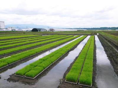 七城米 長尾農園 まもなく平成30年度の田植えです!その前に美しすぎる苗床の様子をご紹介いたします!_a0254656_17564959.jpg