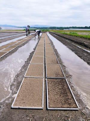 七城米 長尾農園 まもなく平成30年度の田植えです!その前に美しすぎる苗床の様子をご紹介いたします!_a0254656_18045086.jpg