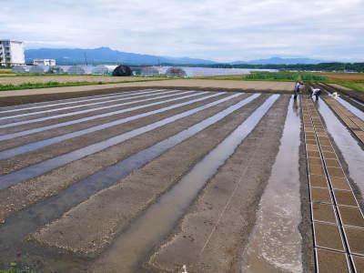 七城米 長尾農園 まもなく平成30年度の田植えです!その前に美しすぎる苗床の様子をご紹介いたします!_a0254656_18095950.jpg