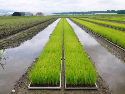 七城米 長尾農園 まもなく平成30年度の田植えです!その前に美しすぎる苗床の様子をご紹介いたします!_a0254656_18222527.jpg