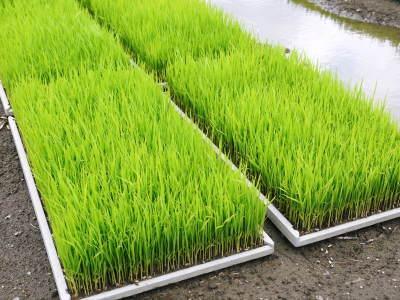 七城米 長尾農園 まもなく平成30年度の田植えです!その前に美しすぎる苗床の様子をご紹介いたします!_a0254656_18245675.jpg