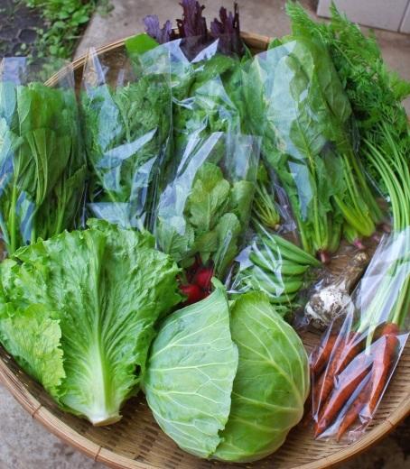 今週の野菜セット(6/26~6/30着)_c0110869_12372686.jpg