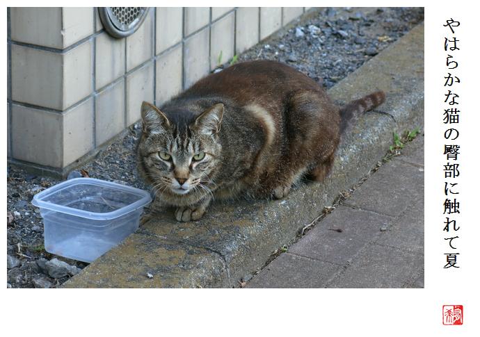 やはらかな猫の臀部に触れて夏_a0248481_22245466.jpg