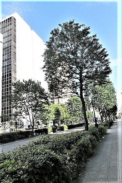 藤田八束の素敵なお話@楽しい一日に感謝、明日もハッピーな日であることを祈っています・・・人生は楽しくあるもの_d0181492_19351384.jpg