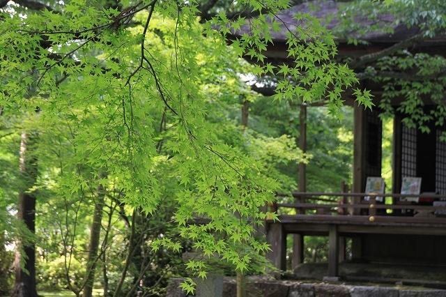 京都 大原 三千院 ①新緑と苔_f0374092_10551385.jpg