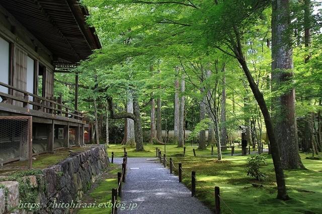 京都 大原 三千院 ①新緑と苔_f0374092_11030803.jpg