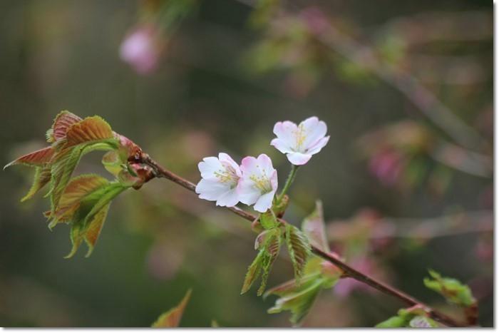 ニセコ~神仙沼('18・6・22)_f0146493_10504452.jpg