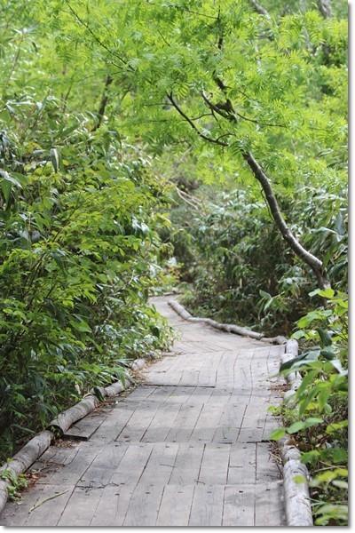 ニセコ~神仙沼('18・6・22)_f0146493_10523048.jpg