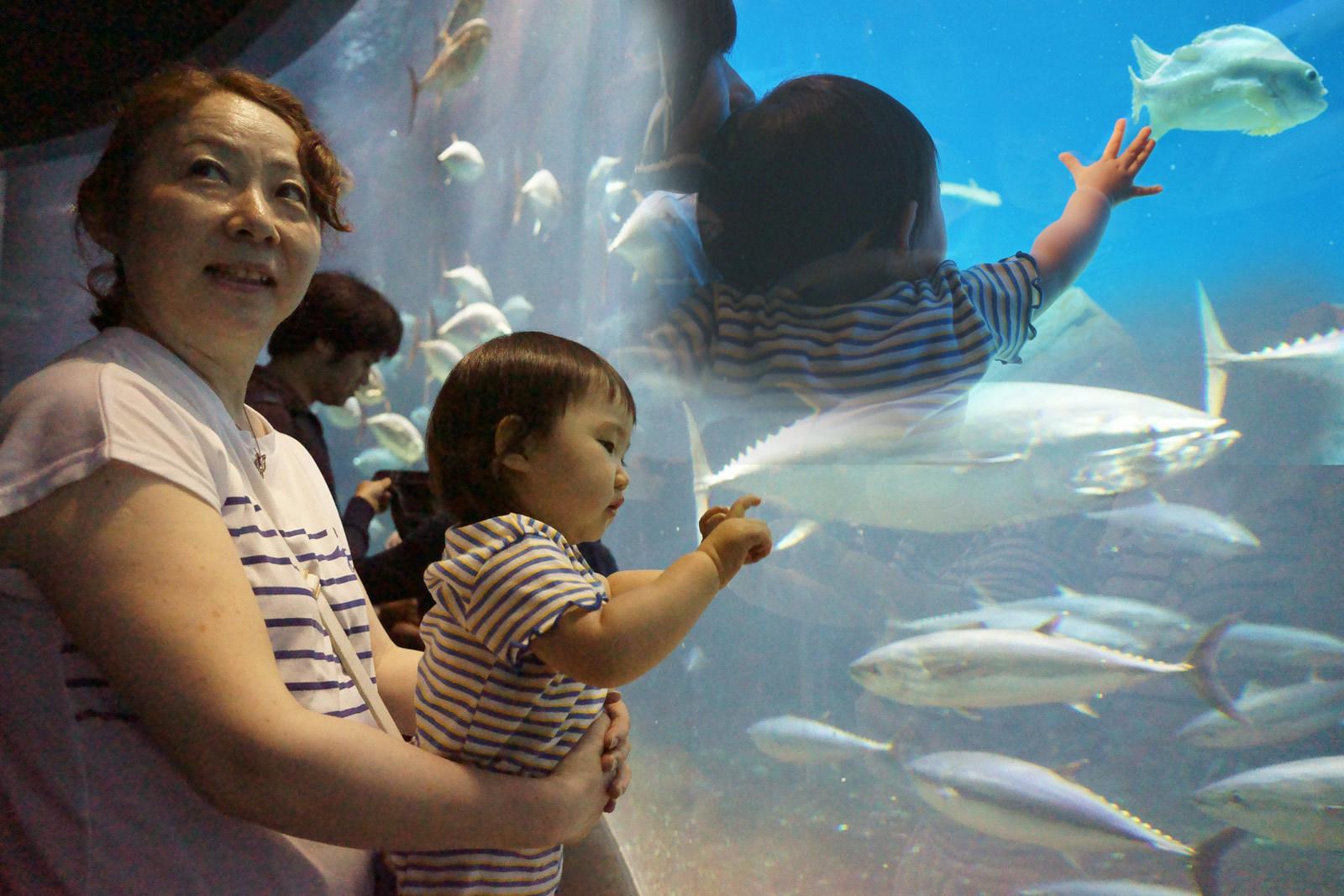 葛西臨海水族園_a0271402_21075868.jpg