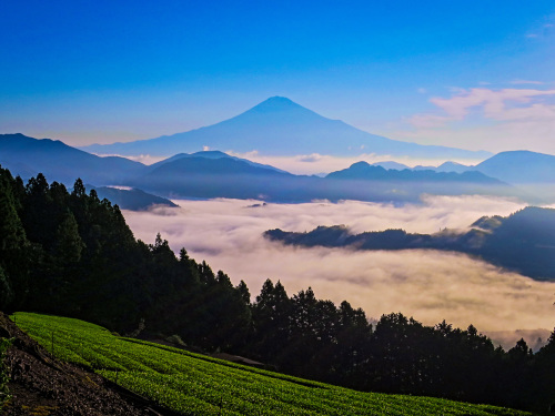 2018.6.25朝の富士山と雲海(吉原)_e0321032_15473213.jpg