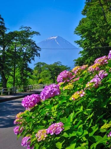 2018.6.25ラベンダー・あじさいと富士山(河口湖畔)_e0321032_16084316.jpg