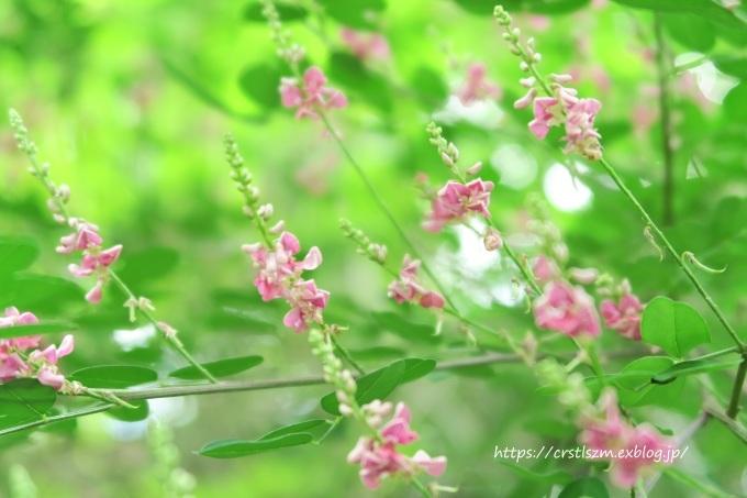 萩の花道_e0348754_08132400.jpg