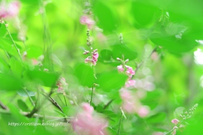 萩の花道_e0348754_08134732.jpg