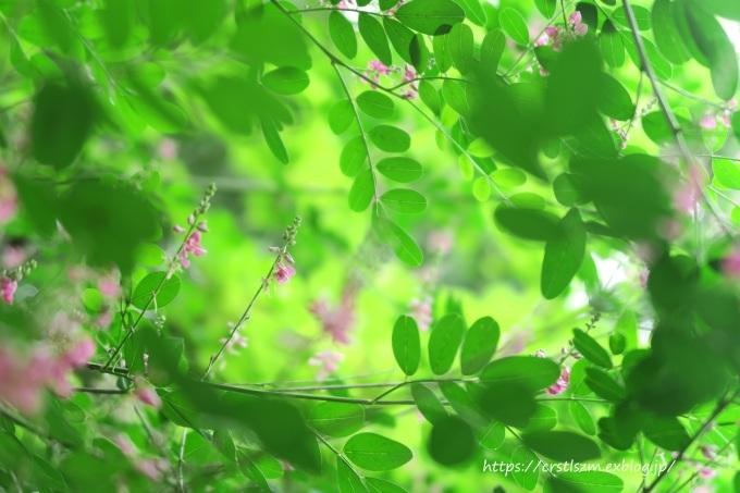 萩の花道_e0348754_08140371.jpg