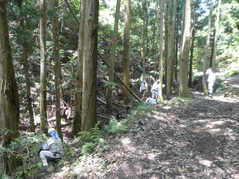 杉林の間伐・・・孝子の森_c0108460_20552703.jpg