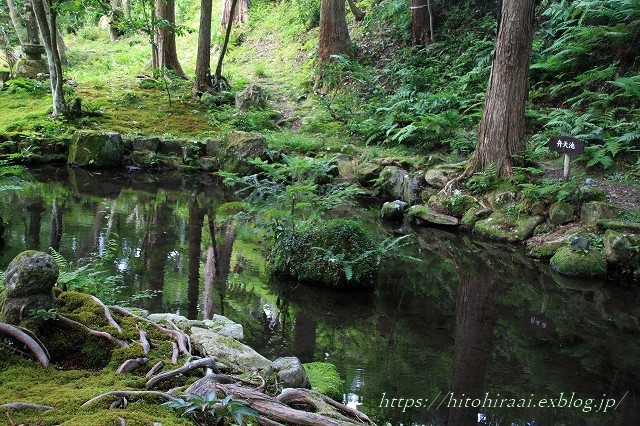 京都 大原 三千院 ①新緑と苔_f0374092_19100451.jpg